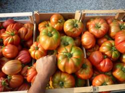 Prodotti Azienda agricola